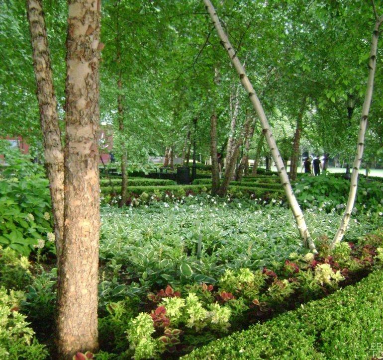 The Vivid Garden